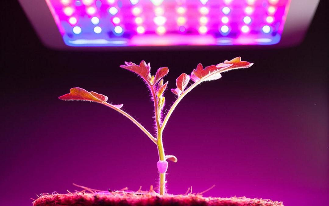 Les différents types de lampes pour cultiver des plantes d'intérieur