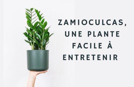 Astuces et conseils pour prendre soin de son Zamioculcas